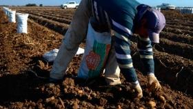 Nueva escala salarial para trabajadores rurales: el sueldo mínimo será de $ 40.000