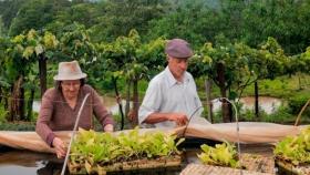 Crean un programa de asistencia para agricultores familiares, campesinos e indígenas