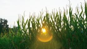 Pronostican un otoño más cálido en el sur y centro del país