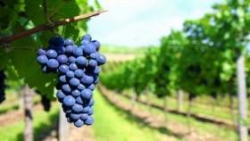 Comunicado en defensa de la vitivinicultura argentina