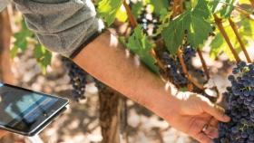 CepApp: la herramienta indispensable del productor vitivinícola