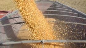 En plena trilla de maíz, las relaciones de precios grano/fertilizante 21/22 están debajo de los históricos