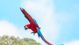 Medio ambiente: 170 años después volvieron a volar en su hábitat natural