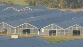 Paneles solares transparentes filtran la luz suficiente para hacer crecer de igual forma los cultivos en invernaderos