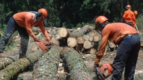 Economías Regionales: Crece el sector forestal y la producción de hortalizas entra en crisis