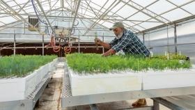 Estados Unidos: un centro de reforestación busca plantar 68 millones de árboles