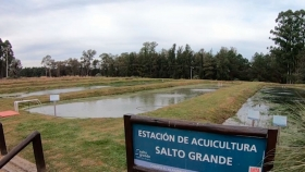 Efluentes en piscicultura