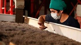 Paraguay es el principal productor mundial de chía