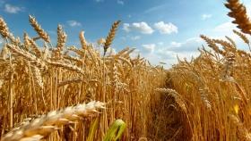 Etapa de estrategias para el control de malezas en el trigo
