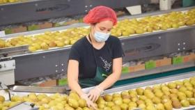 Avance de temporada 2020-2021: Exportaciones de frutas frescas chilenas crecen 9%