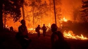 Incendios en América Latina: la catástrofe que está afectando a gran parte del continente americano