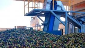 Empresa olivícola certifica calidad para exportar a Estados Unidos