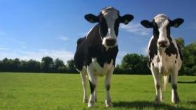 Raigrás libre de transgénicos: una nueva generación de hierbas