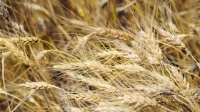 Condiciones propicias para la sequía en América del Norte