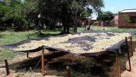 Inauguran un molino de algarroba en el departamento más pobre de Salta