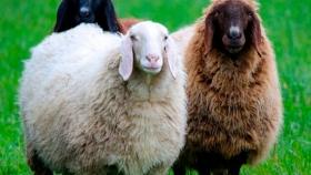 Razas de ganado para conservar la biodiversidad