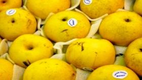 Se consolida el aumento de las exportaciones de peras argentinas