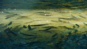 Pasado, presente y perspectivas futuras de la piscicultura comercial en Venezuela