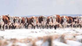 Abrirán un laboratorio de genética ganadera en Tierra del Fuego