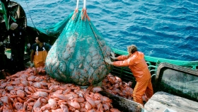 A pesar del coronavirus, la pesca aportará este año unos USD 1.300 millones en exportaciones
