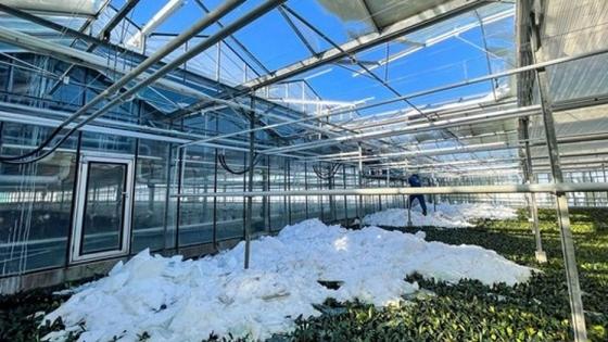 El clima invernal holandés causa alrededor de 40 millones de euros de daños en invernaderos