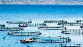 Nación y Río Negro buscan potenciar la acuicultura