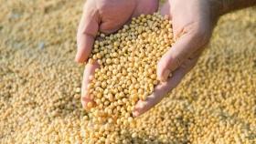 """El INASE busca generar un mercado más """"justo"""" y aumentar el uso de semillas fiscalizadas"""