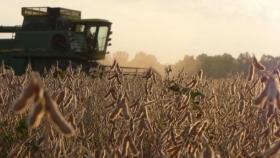 Calidad industrial y comercial de la soja en la zona núcleo-sojera. Campaña 2020/21
