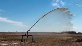 Efluentes porcinos mejoran el rendimiento y el balance de nutrientes en maíz