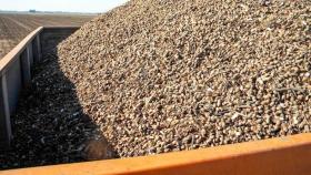Productores de maní deberán registrarse obligatoriamente