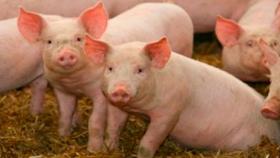Con tecnología trabajamos menos y mejora el bienestar animal