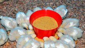 Comedero de pollos de iniciacion Avicorvi