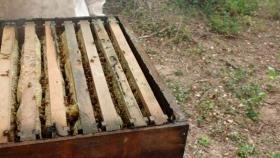 Apicultura orgánica argentina se instala en mercados internacionales con interesante perspectiva