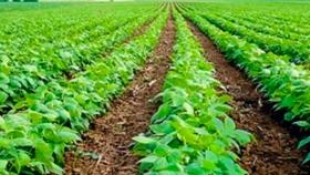 La producción orgánica como modelo de desarrollo