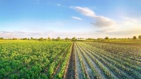 Sembrando las semillas de la agricultura industrial en Mozambique