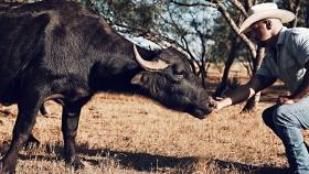 La crema italiana OroBianco hace magia con leche de búfalo de agua