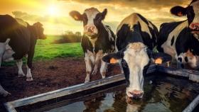 La calidad del agua para consumo vacuno es imprescindible para una buena producción