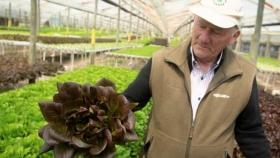 Hidroponia: de cultivo marginal a economía de escala