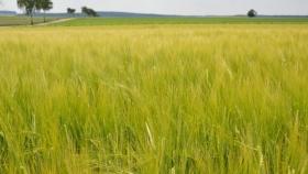 Por qué es importante proteger al cultivo desde la semilla