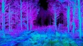 Investigadores de EEUU y Brasil desarrollaron un dron autónomo que logra inventariar bosques y combatir la deforestació