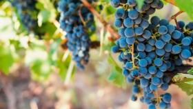 Felipe Rutini y la épica historia del pionero que inició la tradición de vinos Premium