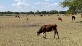 Solicitan la emergencia agropecuaria en Catamarca, Rio Negro, San Juan y Chaco