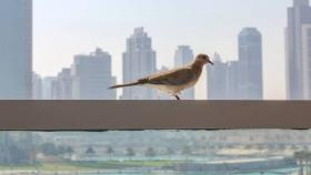 Por qué deberíamos impulsar el desarrollo de ciudades bird-friendly
