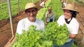 IICA: Estrategia Nacional de Agricultura Familiar focalizará acciones y proyectos para beneficio de productores