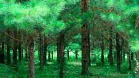 Ley de Bosques