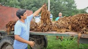 Acuerdan suba 50% en precio de tabaco , industrias y dealers se oponen