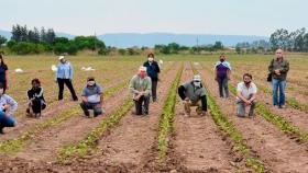 Aplican abonos orgánicos para lograr una producción tabacalera sostenible en Jujuy