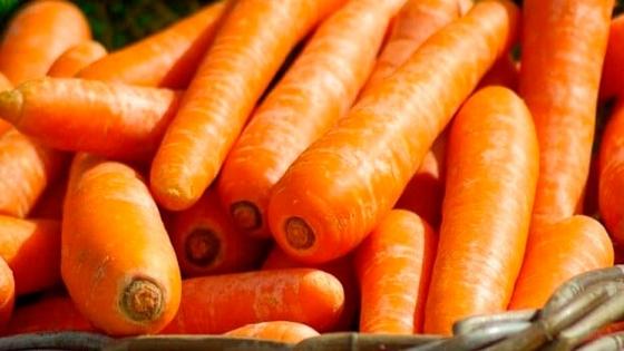 ¿Cómo identificar las plagas y enfermedades que afectan al cultivo de zanahoria?