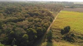 Protección de bosques: Producir conservando la naturaleza es posible
