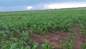 Se espera la lluvia para el Chaco